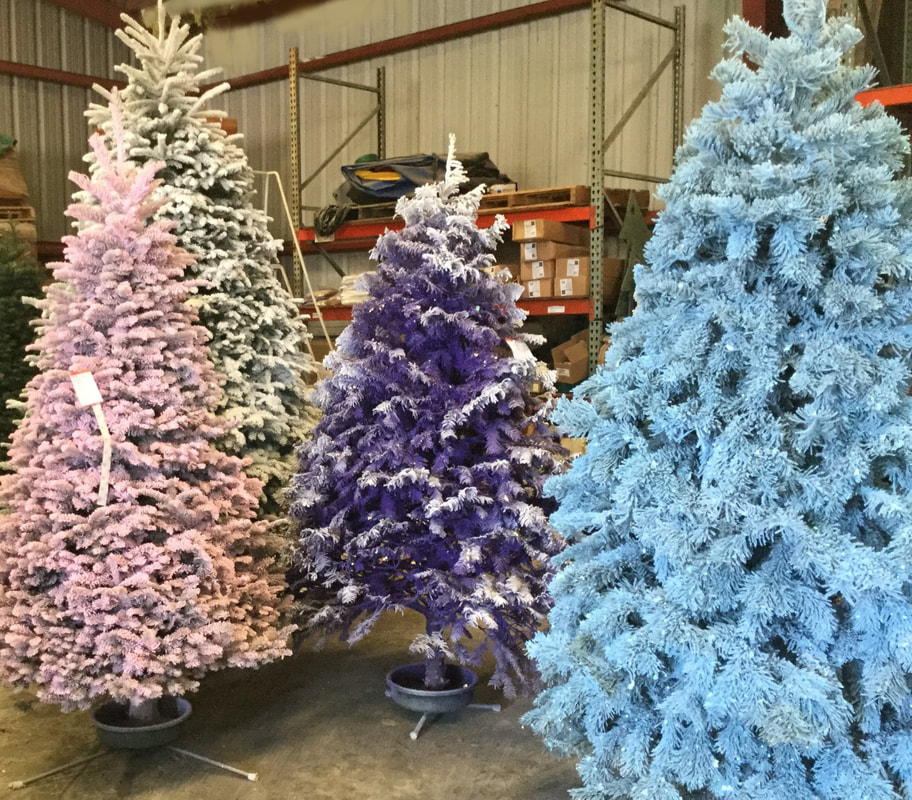 Where Did Christmas Trees Originate.Christmas Trees Battaglia Ranch Christmas Tree Farm